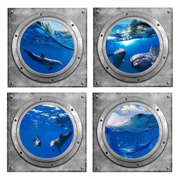 Muursticker Patrijspoorten Dolfijnen - Onderwaterkamer