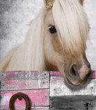 Poster (zelfklevend) paard detail