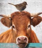 Poster (zelfklevend) boerderij detail
